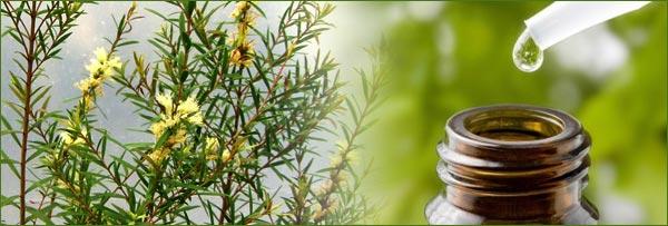 tea-tree-oil-tinh-dau-tram-tra-cham-soc-lan-da-mun-1