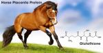 Nhau thai ngựa và L-Glutathione thần dược cho sắc đẹp