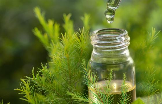 TEA TREE OIL - TINH DẦU TRÀM TRÀ CHĂM SÓC LÀN DA MỤN