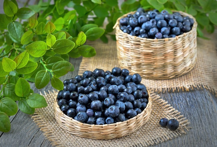 """Blueberry – """"Vũ khí"""" tăng cường sức khỏe, vẻ trẻ đẹp từ thiên nhiên"""