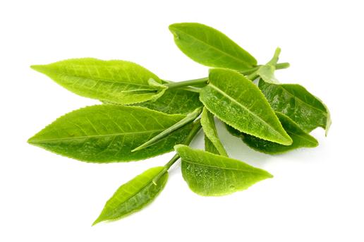 Tinh chất trà xanh